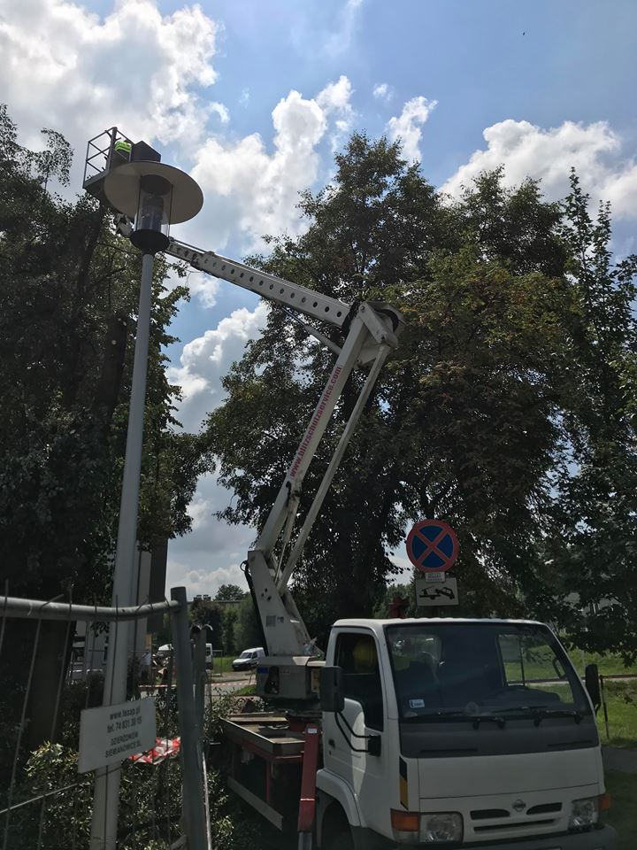Wycinka i przycinanie drzew